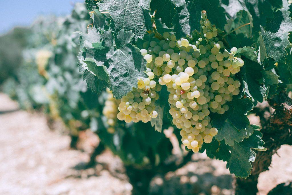 Vignoble de Nantes - lieux de prestations