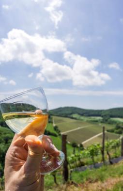 Visite de vignes avec Oenorandos